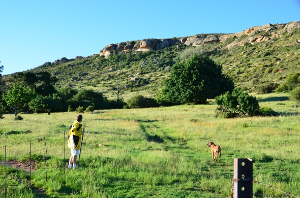 The veld has made a quick recovery after all the rain.