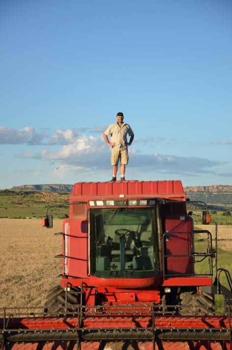 Let the wheat harvest begin!