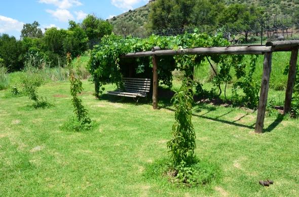 Catawba and Hannepoort grape vines.