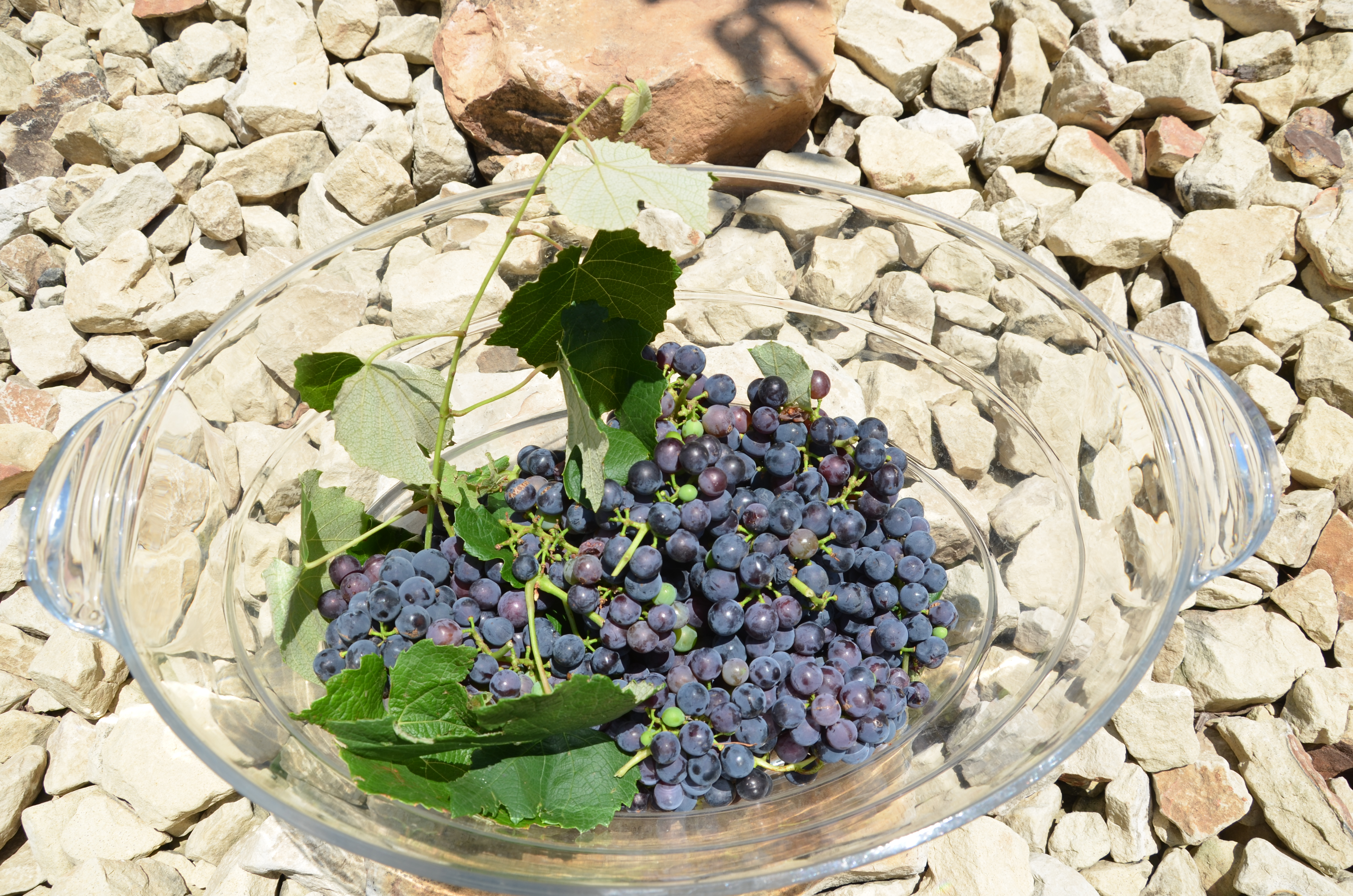 how to make grape jelly from fresh picked grapes