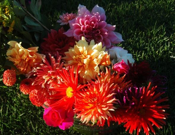 Dahlias and roses.