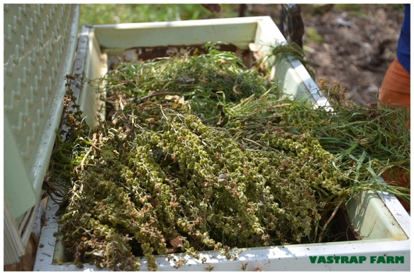 Compost 016
