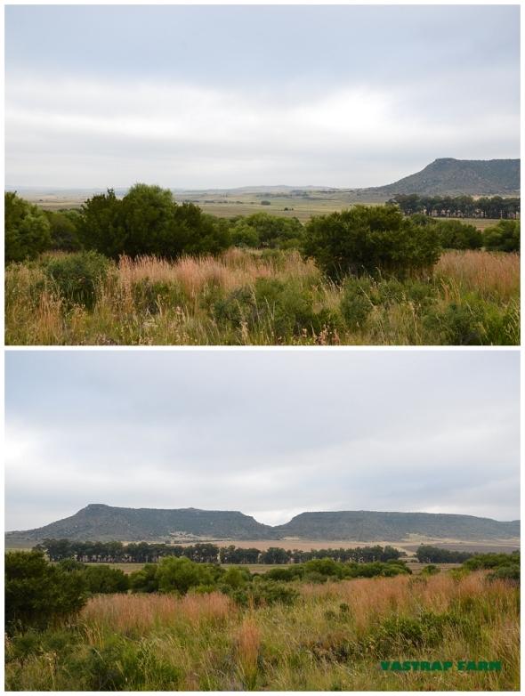 Moody vistas.