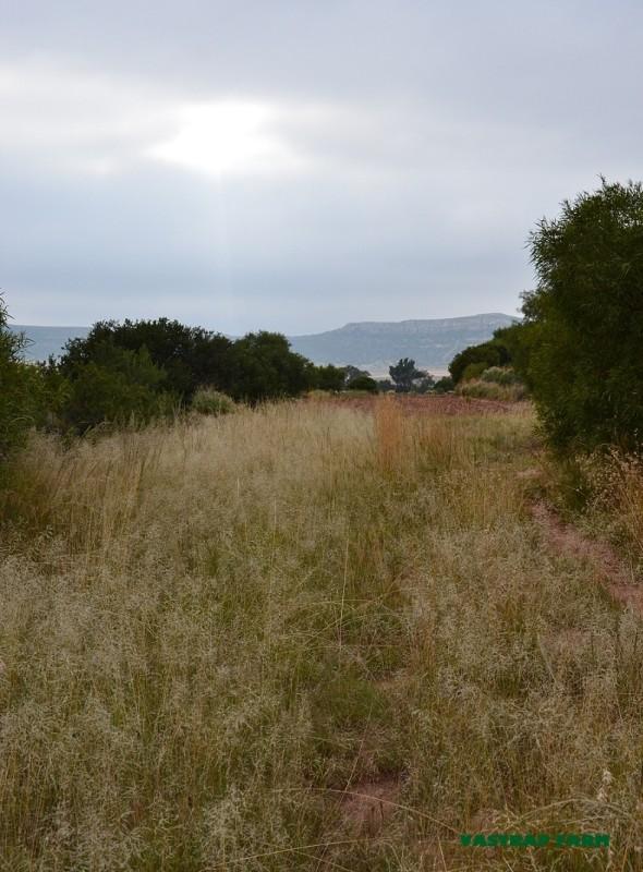 Grass seeds.
