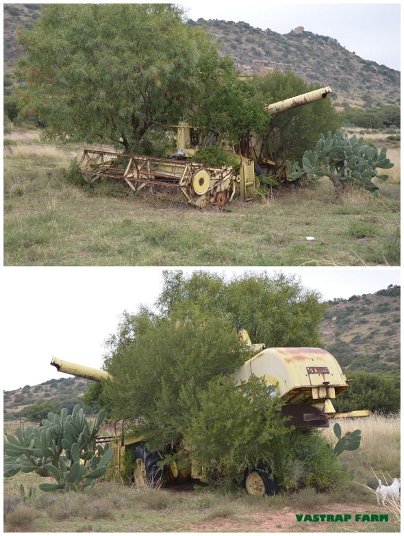 Farm sculpture.