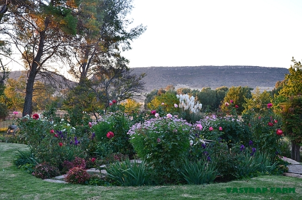 Garden in the fading sun.