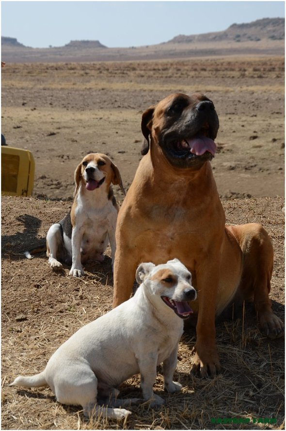 Tumi, Patch and Coco.