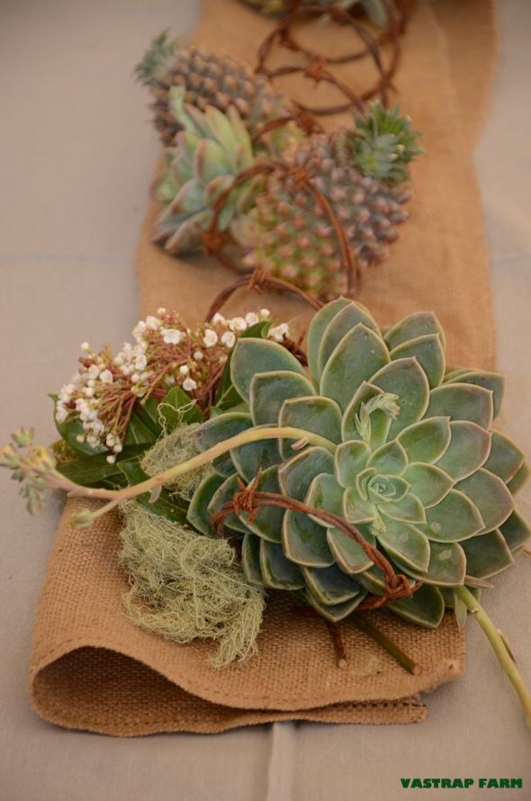 Echeveria and pineapples.